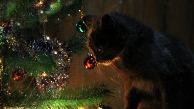 Photo of Как выбрать искусственную ёлку на Новый год?