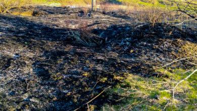 Photo of Сотрудники ГИБДД поймали поджигателей травы