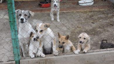 Photo of На передержке у волонтеров 82 собаки, но их продолжают подкидывать